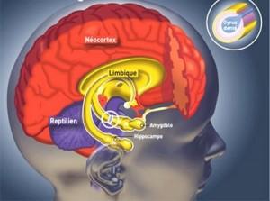 Amygdale